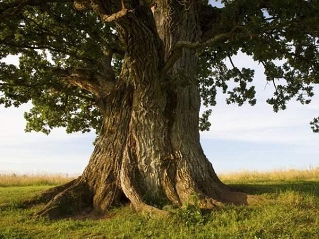 Магические деревья и их свойства...
