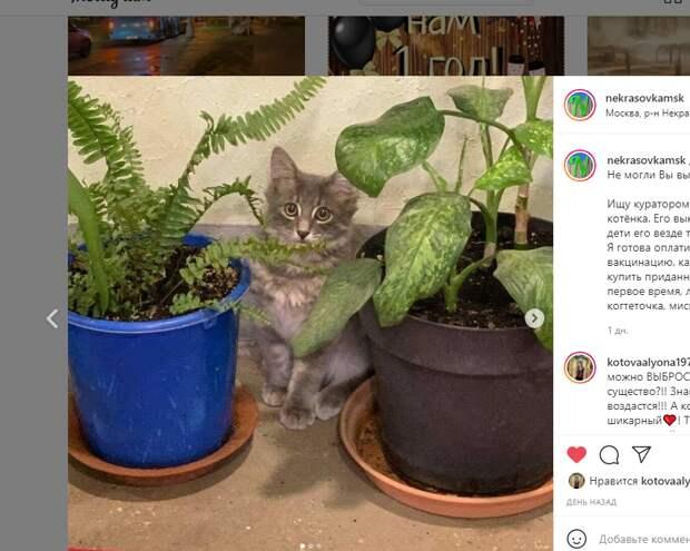Выброшенного котенка в Некрасовке «затаскала» детвора