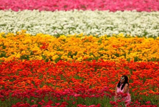 День весеннего равноденствия 2017: весна вступила в свои права