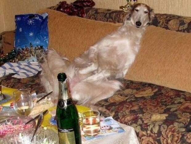 Когда праздник удался врасплох, кошки, смешные, собаки, фото, шкодники