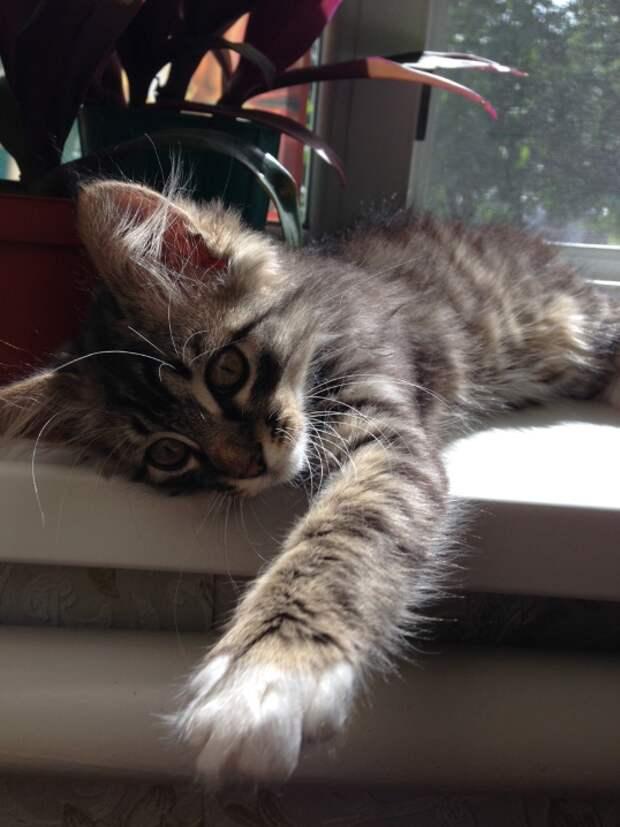Тимофей, кот с характером