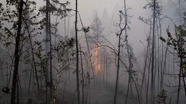 В Волгоградской области ввели особый противопожарный режим