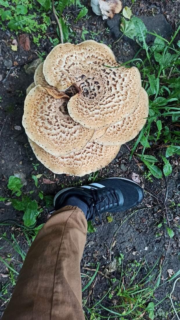 Фото дня: во дворе на Фонвизина вырос гриб