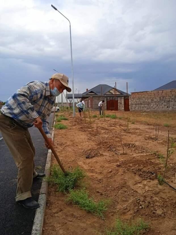 Туркестан полным ходом озеленяют и благоустраивают