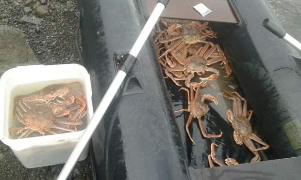 Ловля крабика на Камчатке. Как мы проводим лето. Рыбалка, Камчатка, Длиннопост, Краб