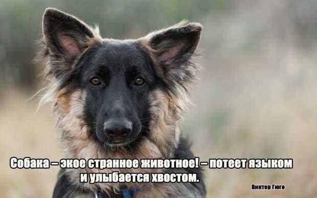 5.  афоризмы, животные, собаки