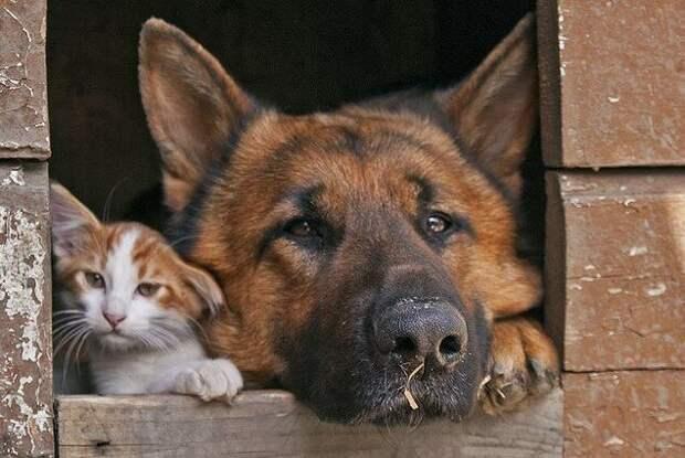 Собака приютила в своей будке кошку, которая просто стала не нужна никому