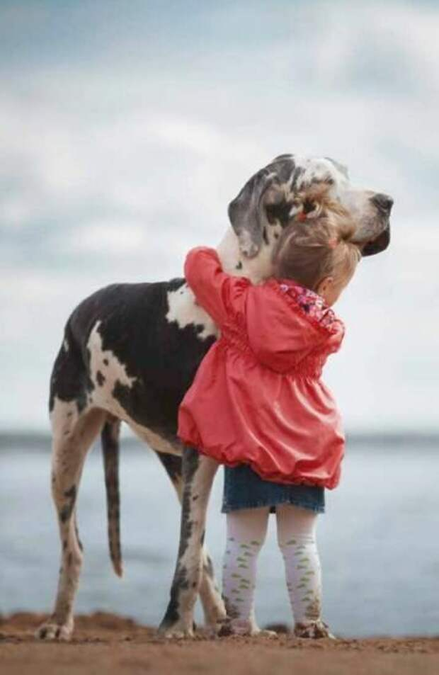 Муж заставил избавиться от собаки. Любовь, чуть не разрушившая жизнь