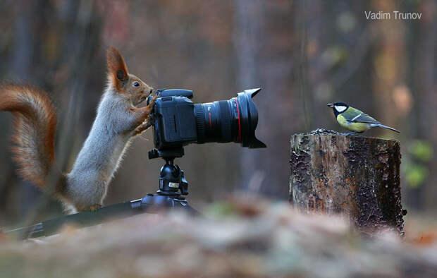 squirrel-photography-russia-vadim-trunov-2-1