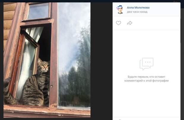 Пушистого Мотюшу из Марьина ищет хозяйка