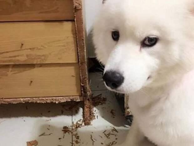 Собака съела порноколлекцию своего хозяина, которую он собирал 10 лет
