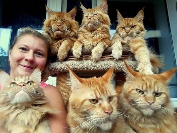 У котов самая богатая палитра презрения и недовольства гифки, коты, фото