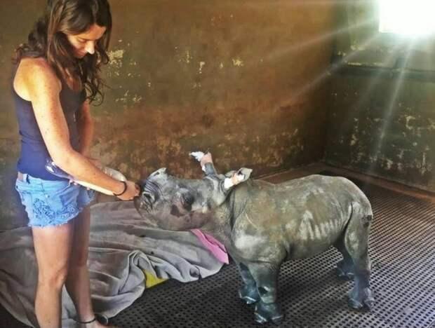Спасение детеныша носорога