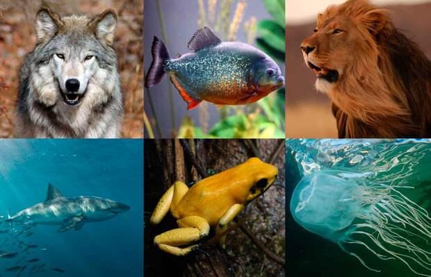 10 самых опасных животных в мире.