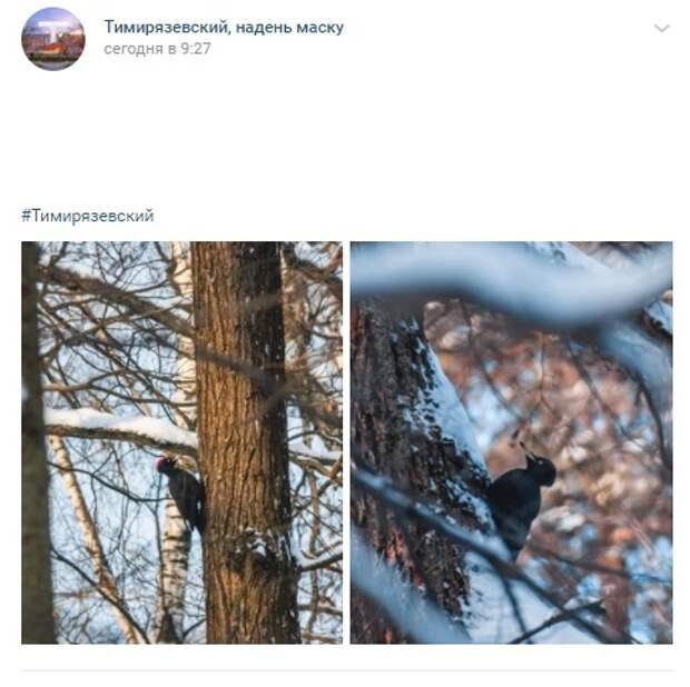 Фото дня: краснокнижного дятла заметили в Тимирязевском лесу