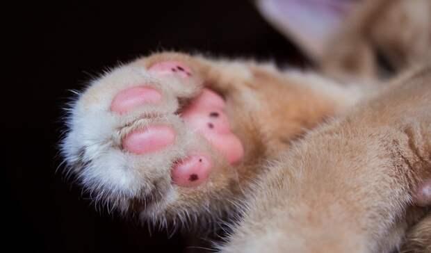 Вподвале одного издомов Петрозаводска замуровали кошачье семейство