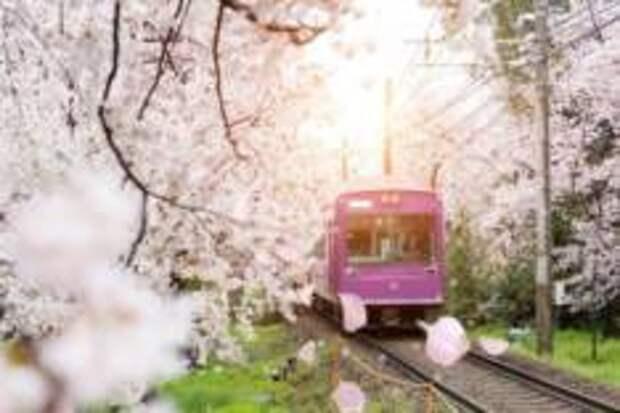 По Киото на метро, автобусе и велосипеде