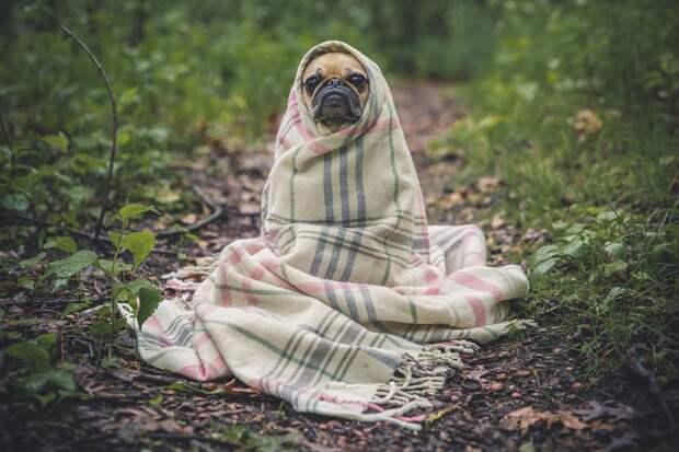В Орловке откроют приют для бездомных животных