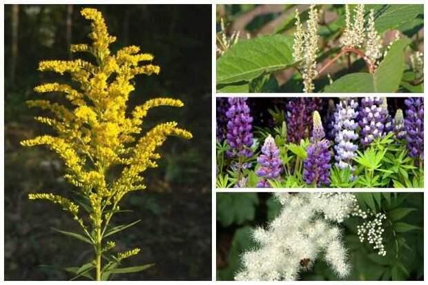 инвазивные растения