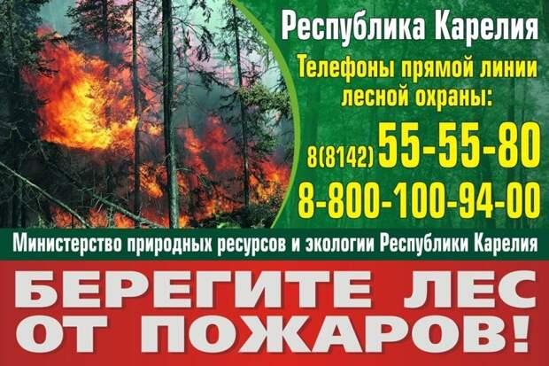 В Карелии началось авиапатрулирование лесов