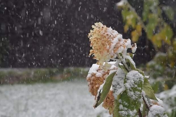 Репетиция зимы: Россиян предупредили о похолодании и снегопадах