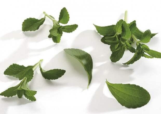 Экологичная кухня: Медовые листья стевии на пользу организму