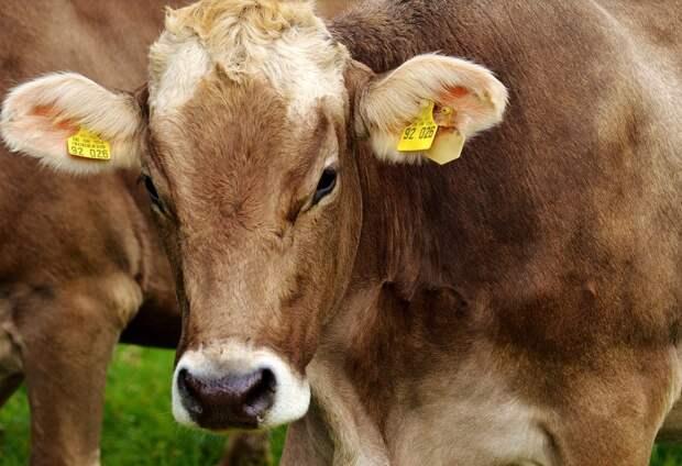 Минсельхоз РК: В Крыму развивать животноводство легче, чем на материке
