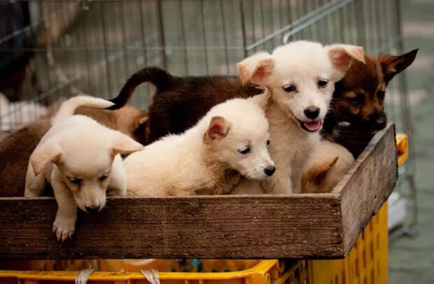 10 жутких кадров, сделанных на собачьих рынках в Северной Корее
