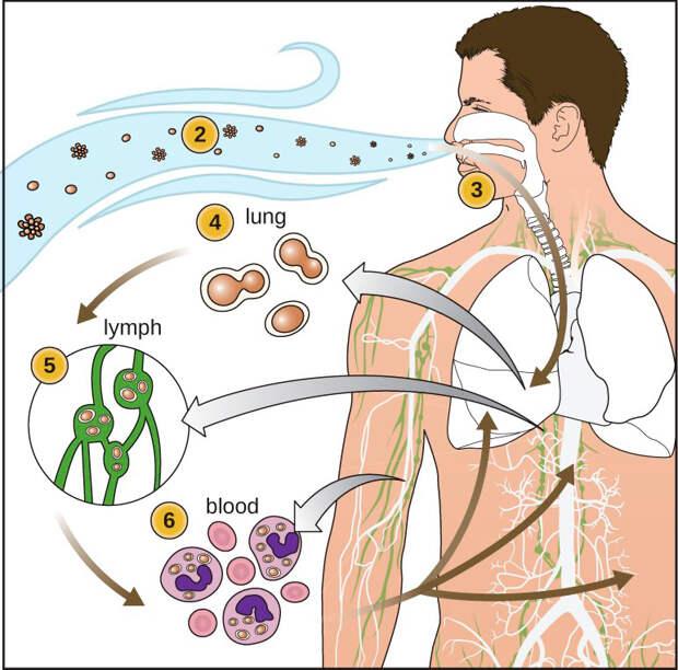 Заболевания, вызываемые патогенными грибами