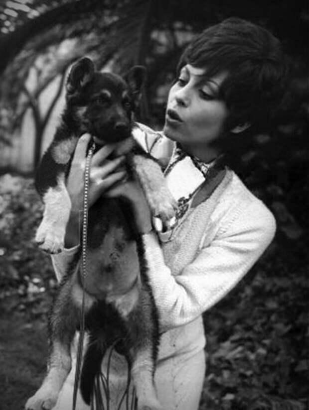 Мишель Мерсье и ее овчарки