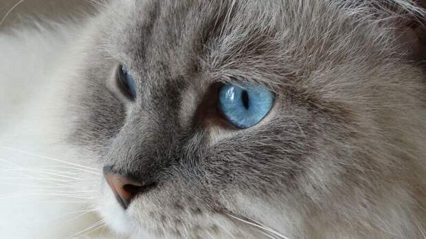 """Домашний кот """"повесился"""" на окне в Сахалинской области"""