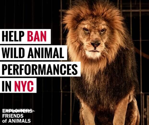 Плакат, агитирующий за запрет использования животных в цирковых выступлениях Нью-Йорка.