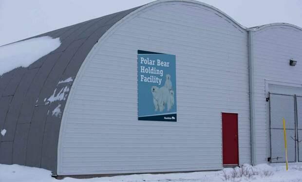 Тюрьма для белых медведей в городе Черчилл Манитоба Канада