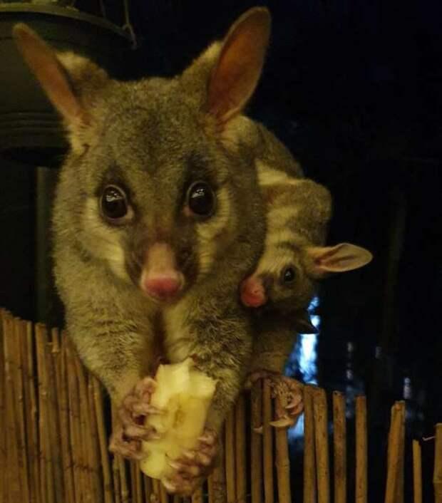 19 зверьков, которых так и хочется погладить, накормить или сфотографировать со всех ракурсов