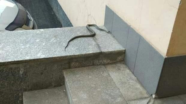 «Опасное соседство»: змею нашли на пороге института в Московском районе