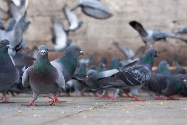 В 4-м Вятском появились охотники на голубей