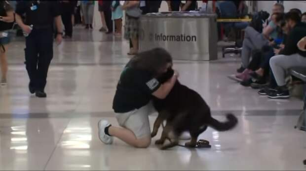 Встреча двоих друзей, которая растрогала до слез всех пассажиров аэропорта