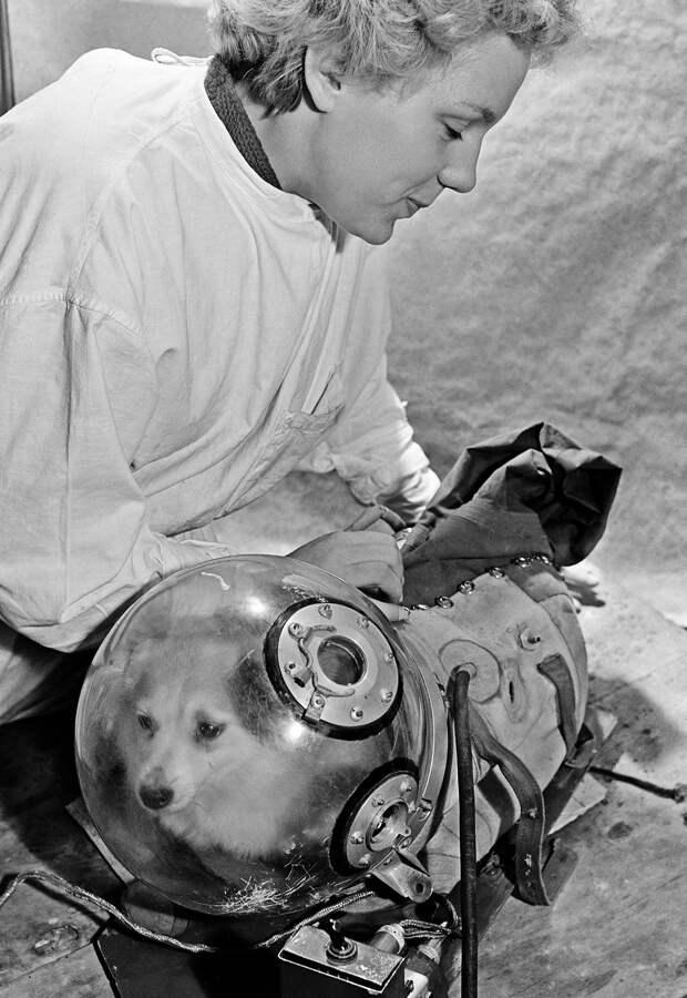 Почему в СССР отправляли в космос собак, а в США обезьян?