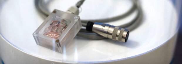 «На фундаментальном уровне ограничений мы не видим»: на что способен новый сенсор для МЭГ