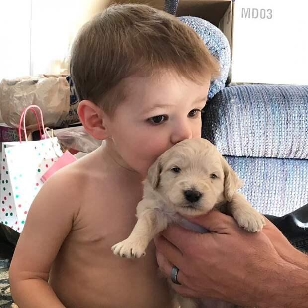 1. Будут взрослеть вместе животные, животные и дети, кошки, питомцы, собаки, фото