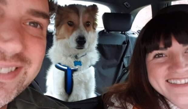 Счастливый пёс вилял хвостом: наконец-то он мог поесть, ведь до сих пор его жизнь была несладкой