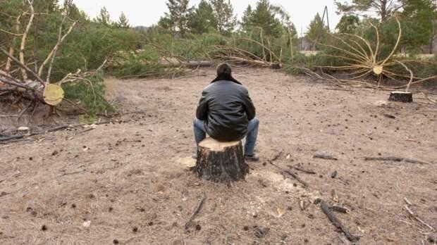 В Забайкалье завели дело о контрабанде в Китай леса на 600 млн рублей