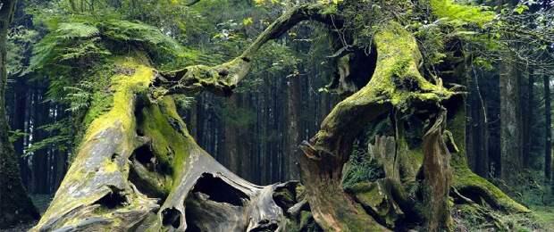 В чем скрыта загадка трансильванского леса Хойа-Бачу или «Бермудского треугольника Трансильвании»