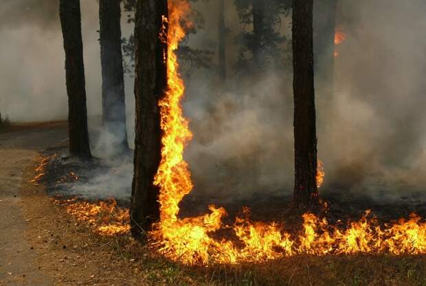 В 31 муниципалитете Кубани действует 4 класс пожароопасности