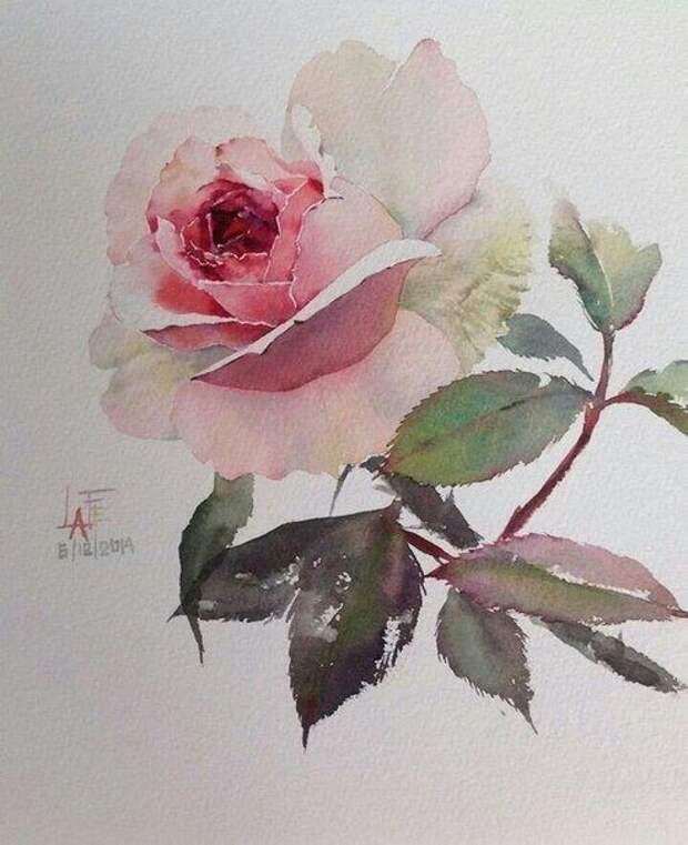 Рисуем акварельные розы: мастер-класс