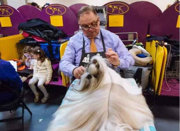 Ох, и нелегкая эта работа – быть грумером на главном собачьем шоу