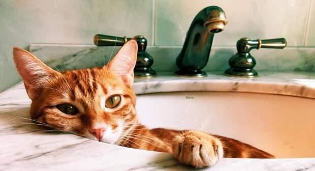 Кошка все время спала в раковине, не давая хозяевам умыться