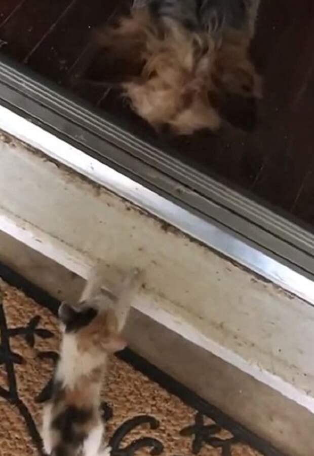 Увидев котенка под проливным дождем, собака решила помочь крохе и привела его в дом хозяйки