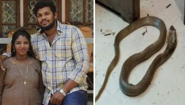 Попытка номер два: индус убил жену при помощи ядовитой змеи