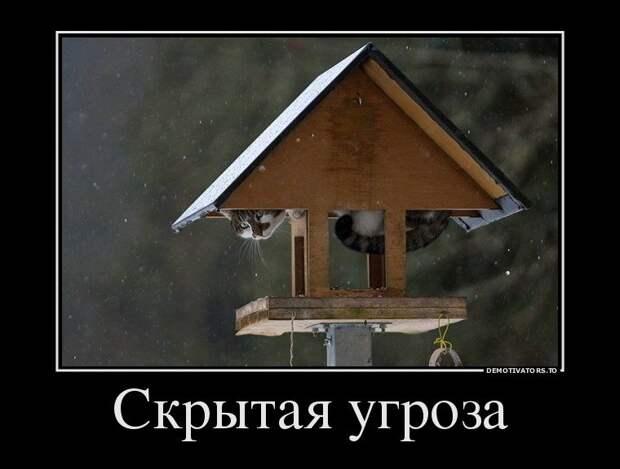 1452591291_demki-10